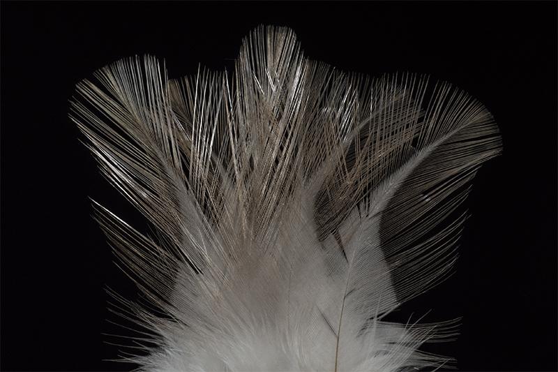leon-indio-cristal-mare