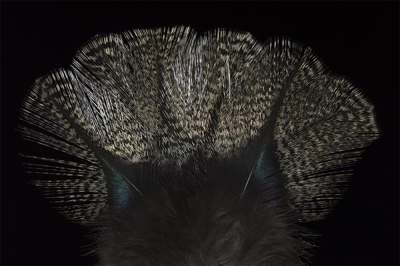 leon-pardo-aconchado-mare