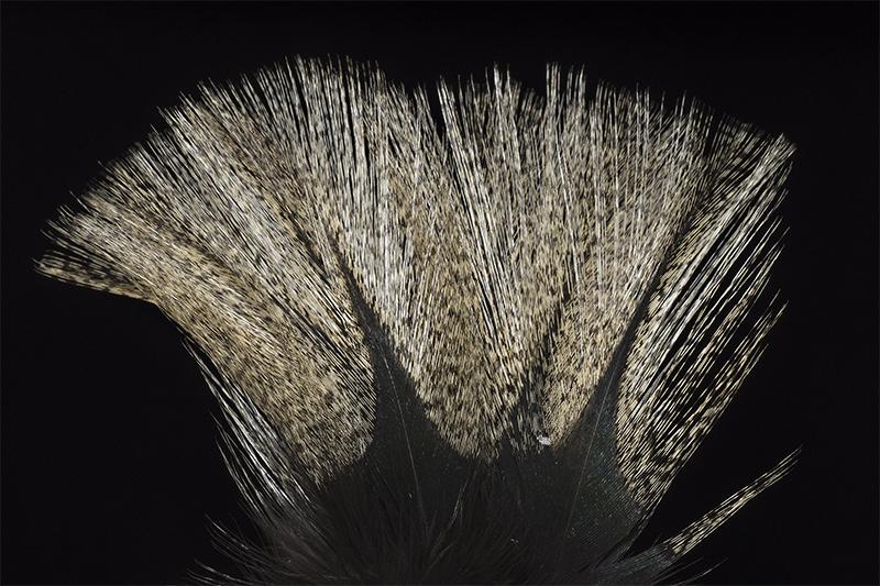leon-pardo-corzuno-claro-mare