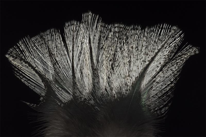 leon-pardo-corzuno-crudo-mare