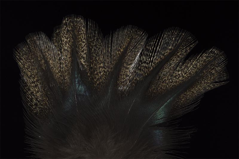 leon-pardo-corzuno-negrisco-mare
