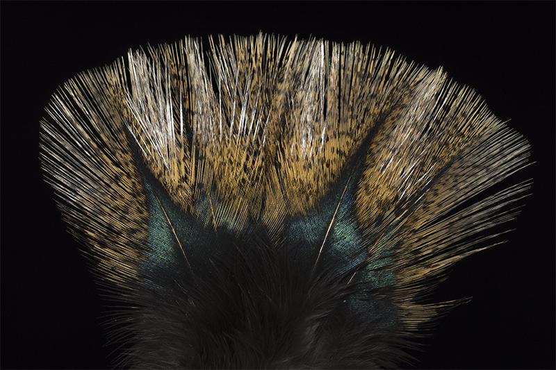 leon-pardo-flor-de-escoba-mare
