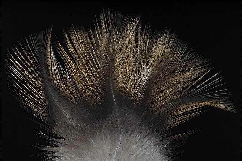 leon-pardo-sarrioso-mare