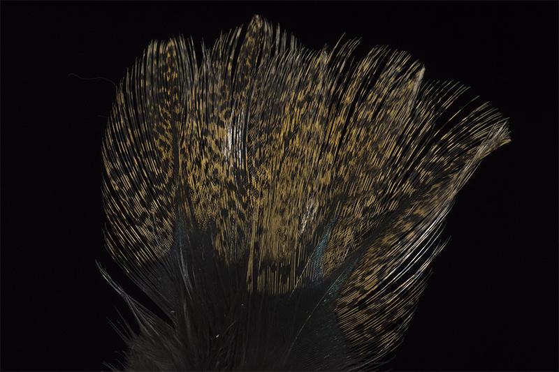 leon-pardo-tostado-mare