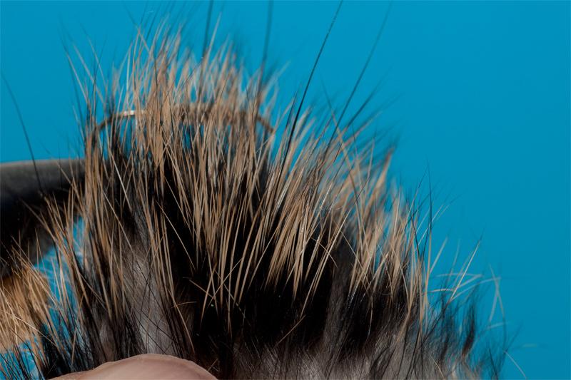остевые волосы картинка