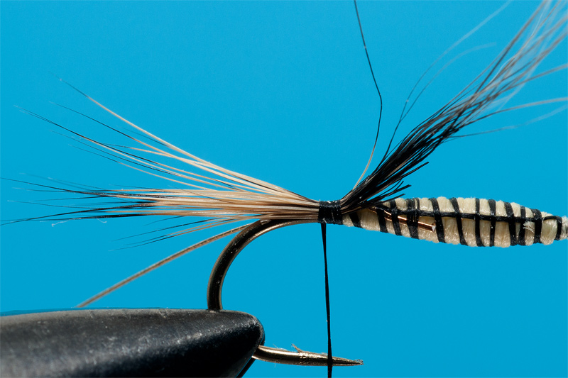 tying Gold Ribbed Hare - step 3