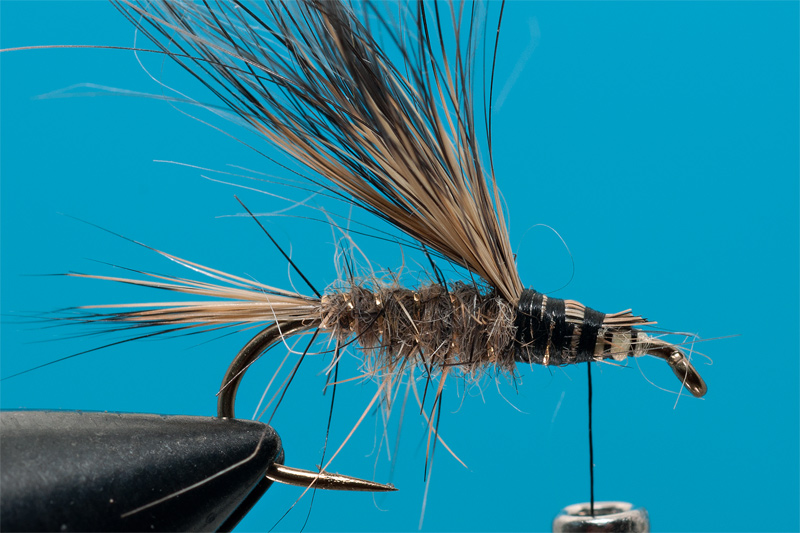 tying Gold Ribbed Hare - step 6