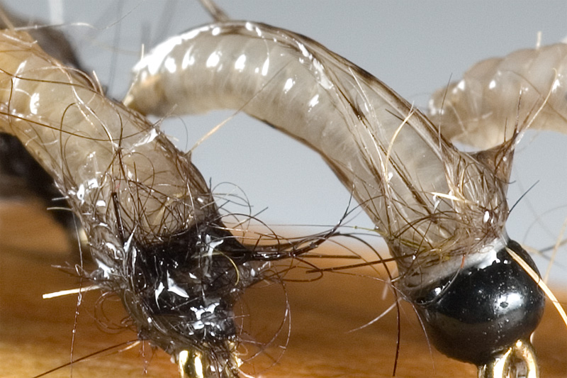 wet bodies of nymphs tied with catgut