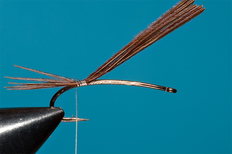 step 2 in tying danica nymph