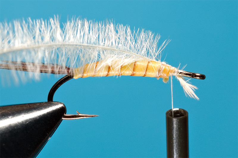 step 5 in tying danica nymph