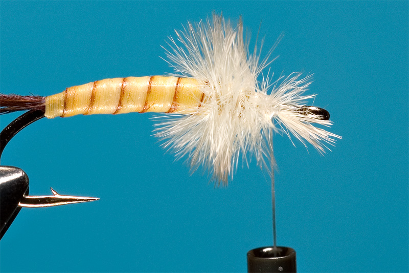 step 6 in tying danica nymph