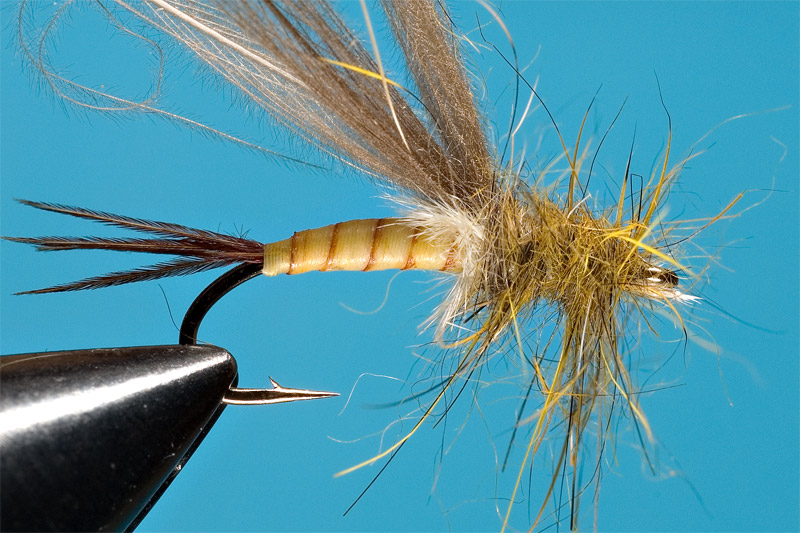 step 7 in tying danica nymph