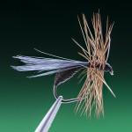 dark brown winged ant