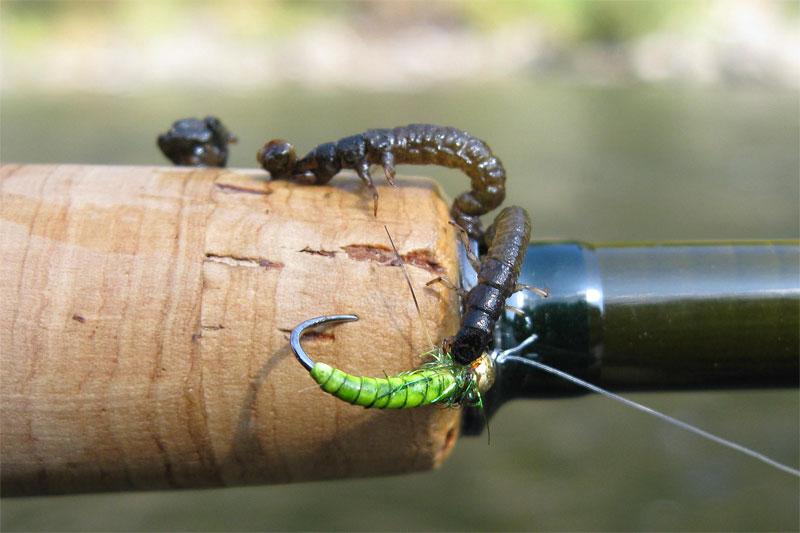 insecte de pe fundul raului Mures la Toplita