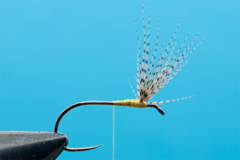 cdc mayfly for trout 1