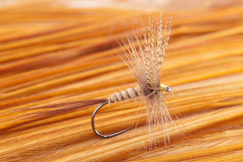cdc mayfly for trout 10