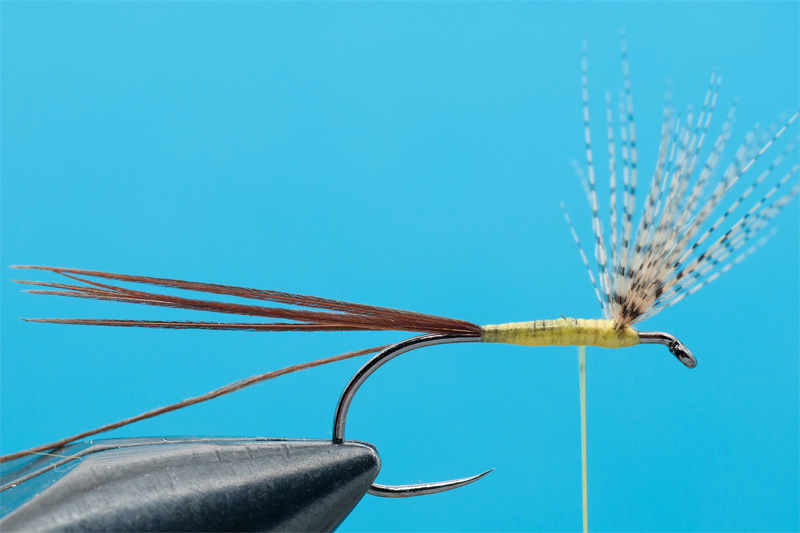 cdc mayfly for trout 2