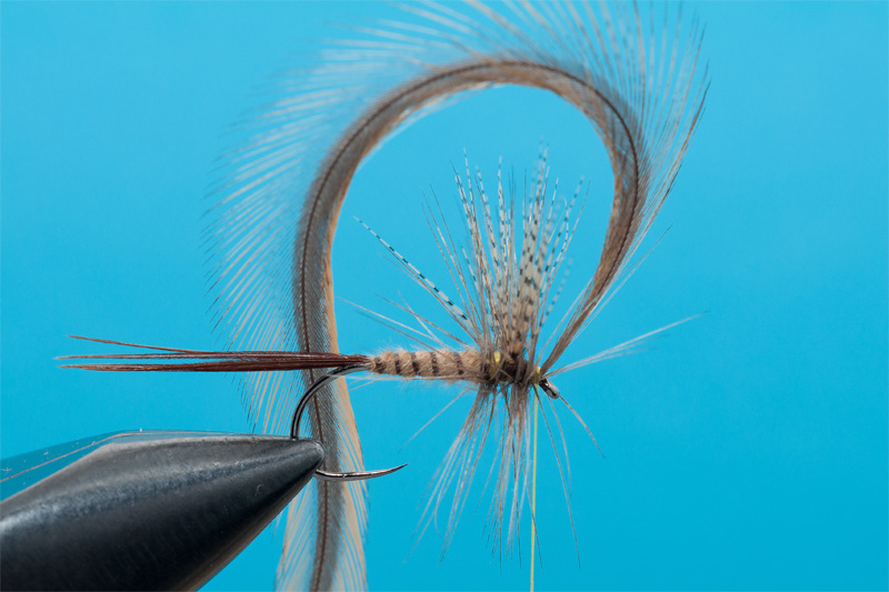 cdc mayfly for trout 8