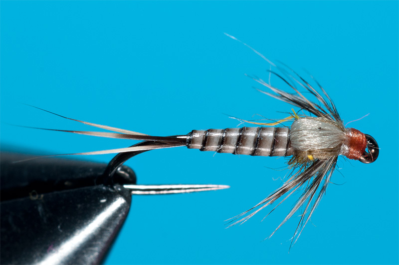 nymph tied with troutline peacock quill
