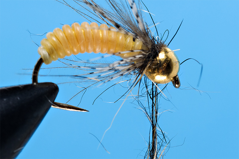 tying-catgut-pupa-step-6