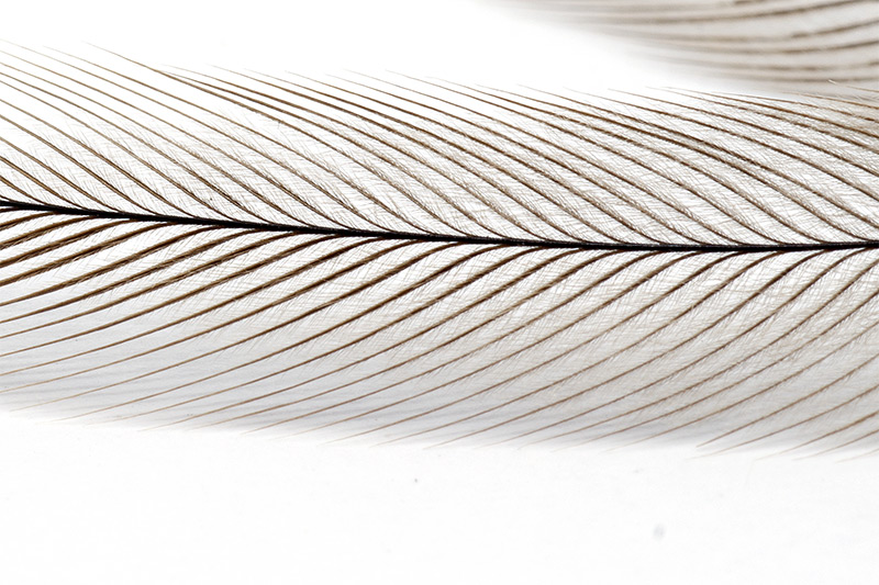troutline-emu-feather-structure