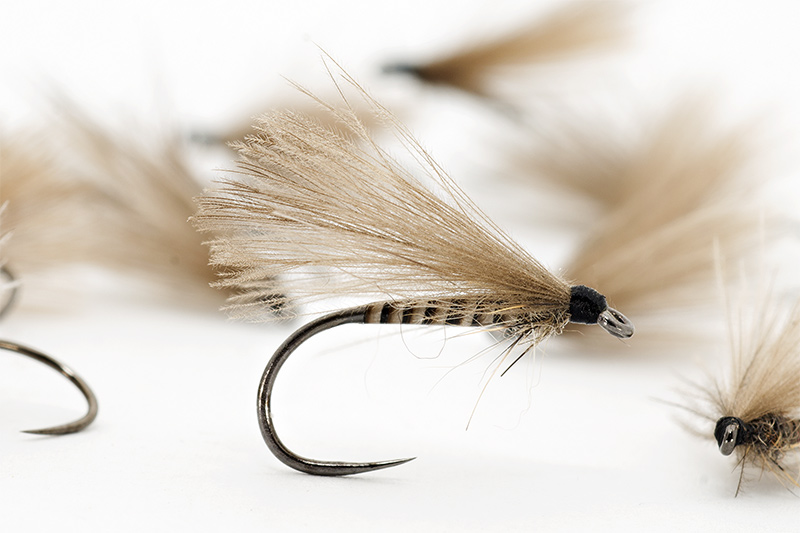 Peacock-Quill-CDC-Sedge-blog.jpg