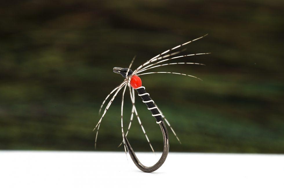 Black-spider-980x649.jpg